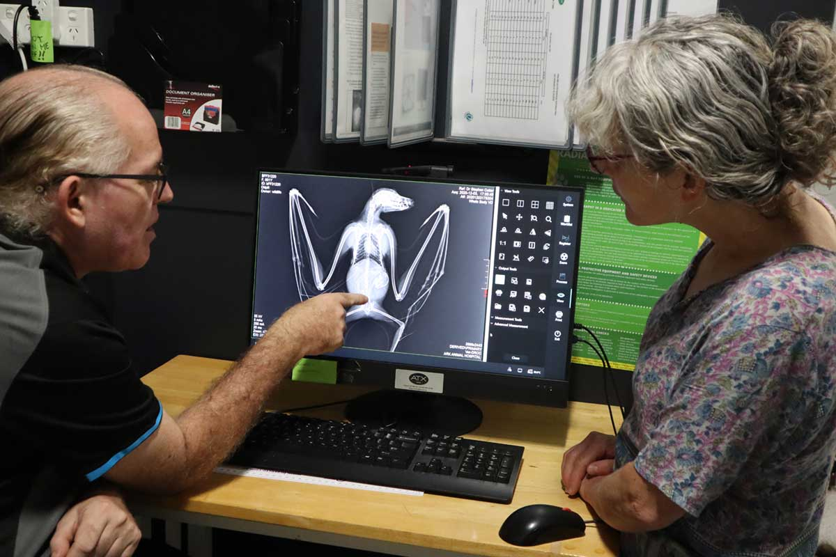 Photo of Vet and Client inspecting xray of bat